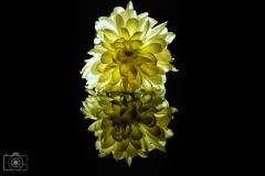 Bloemen-5